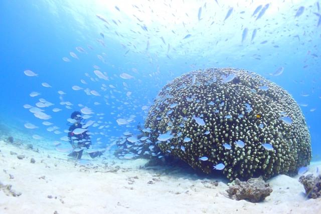 珊瑚とダイビングの男性